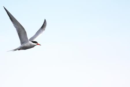 Common TernMC